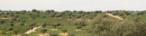 D.O. Vinos de Madrid (our local wine region)