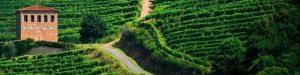 Lee más sobre el artículo Wine on the Camino de Santiago